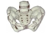 Fantoom bekkenvormen van stof r10072